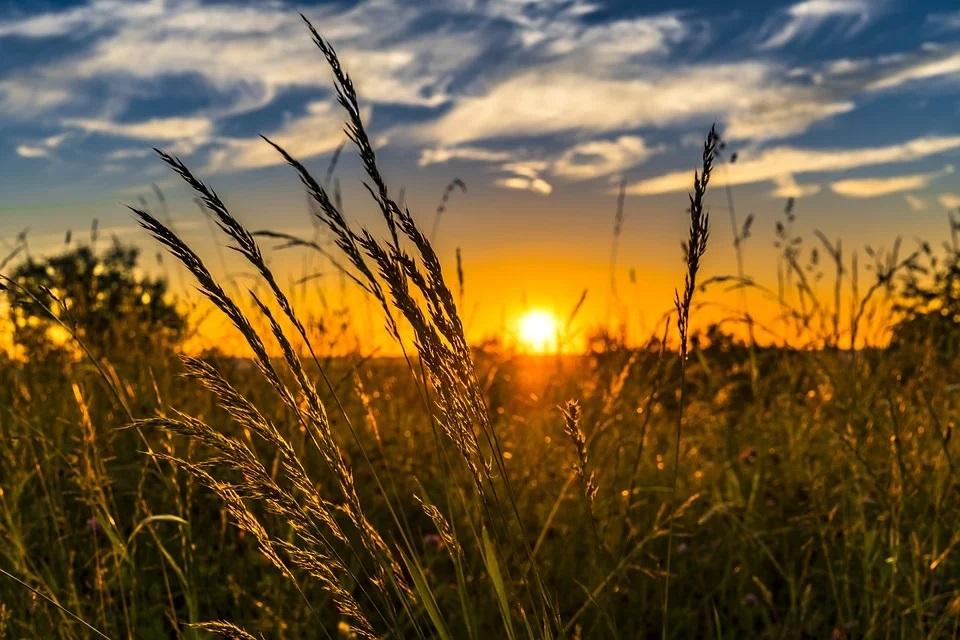 3 façons par lesquelles la technologie contribue à l'évolution de l'agriculture