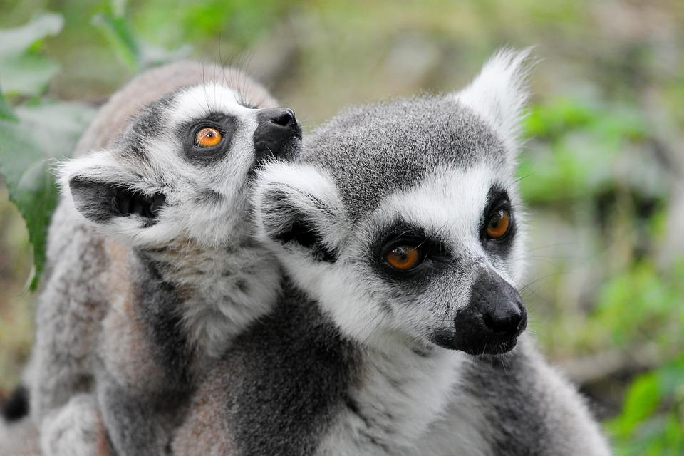 Top 3 des plus beaux parcs nationaux de Madagascar à découvrir