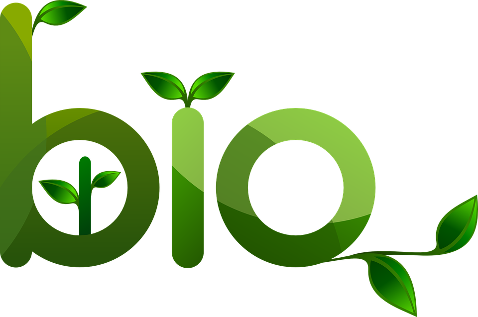 Les aliments bio : une nourriture qui est à inclure dans votre régime
