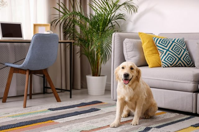 Nos conseils pour choisir votre chien d'appartement